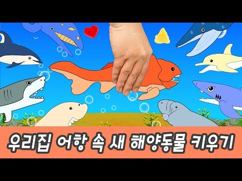 한국어ㅣ우리집 세면대 밑에 둔클레오가 살고 있다. 어린이 동물 만화, 상어와 고래 이름ㅣ꼬꼬스토이