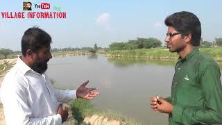 Golden Misri Desi Murghi Farming In Pakistan||Desi Murgi