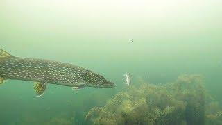 AMAZING Underwater Ice Fishing For Pike