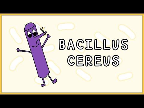 Paraziták kezelése gyógyszerekkel