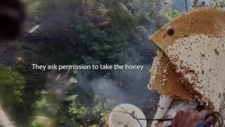 The Honey Harvesters: Tradition and landscape management in West Timor