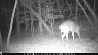 Buck, 9pt 2016