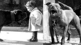 6 опасных и сторожевых пород собак