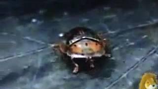 Ugly Bug Ball - Berl Ives