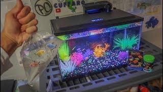 BUYING *NEW* GLO-FISH For AQUARIUM!!!