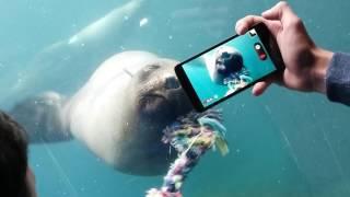 Зоопарк на море