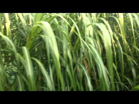 CO3 CO4 thumboormuzhi KERALA. Farming