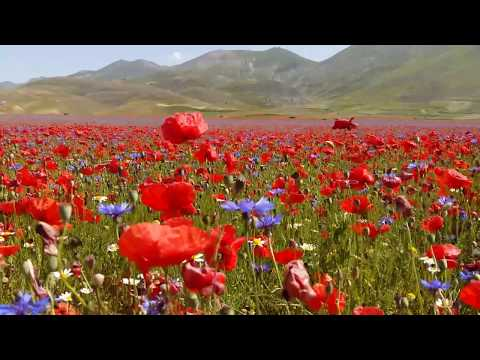 """The Flowery of Castelluccio di Norcia - 2018 - """"poppies, lentils and daisies"""""""