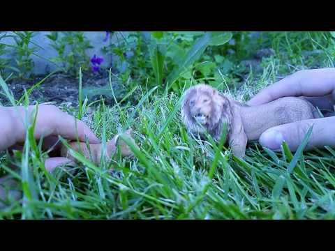 #Paws by Claws ep.16 #kristina kashytska  #schleich #lion # tiger # volf  toys #wolf pack