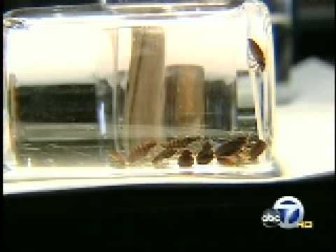News station shows the ThermaPureHeat process kill bed bugs in a hotel.