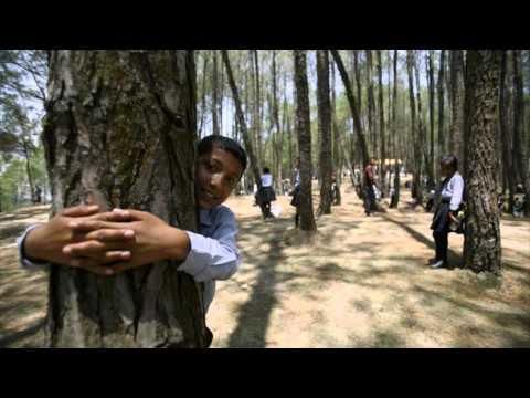Деревья лечат человека продлевая ему жизнь
