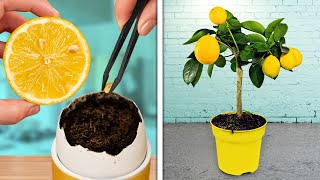 GROWING PLANTS IS SO EASY || Genius Ways To Grow Your Own Garden At Home