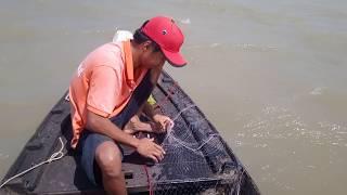 Thả Lưới Cá Úc Trúng Ngay Bầy Cá Đẻ