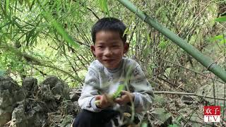 欢子钻进树林搞野货,发现吃竹笋动物,最后他收获一大竹筐 【欢子TV】