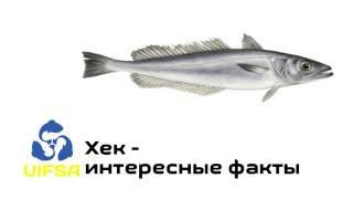 Рыба нототения где ловить