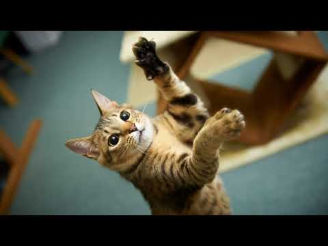 Как вылечить царапины от кошки в домашних условиях быстро?