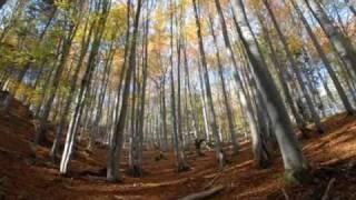 preview picture of video 'Miroslav Saniga: Čarokrásna príroda/Enchanting Nature'
