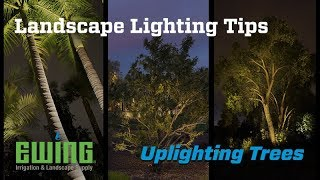 Landscape Lighting Tips - Uplighting Trees