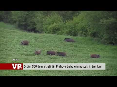 Ordin: 500 de mistreți din Prahova trebuie împușcați în trei luni