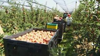 Киргизские фермеры надеются увеличить экспорт продуктов в Россию (новости) http://9kommentariev.ru/