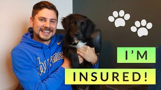 Pet Insurance: What it costs, what it covers, and how to find the best