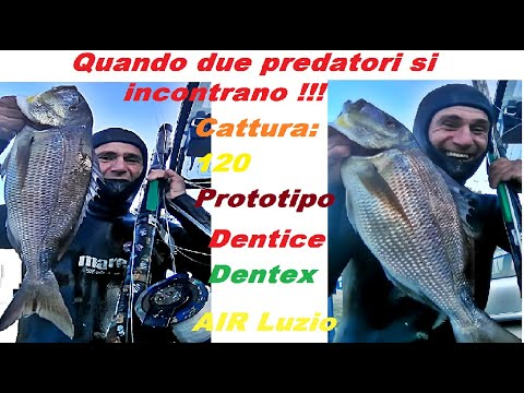 Pesca chiara
