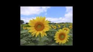 Очень красивая песня про Украину!!! Берет за душу!!!