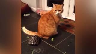 animale broasca testoasa vs pisica