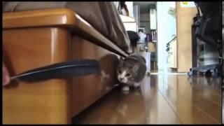Смешное видео про кошек (smeshnoe video pro koshek)   Смешные видео про наших любимых кошек