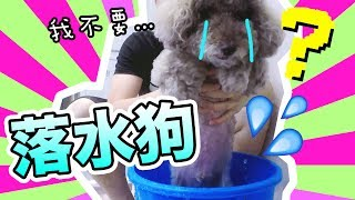 Water dog! First time taking shower with Muffin!?