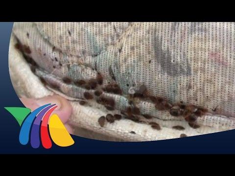 Cuidado con las chinches en la cama | Noticias de Salud