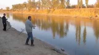 Река цимла рыбалка нижнегнутов клюет гибрид