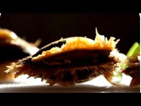 Semillas de albaricoque: beneficios y propiedades.