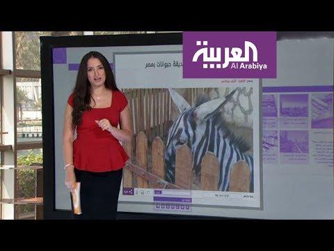 العرب اليوم - تعرف على قصة الحمار المزور في مصر