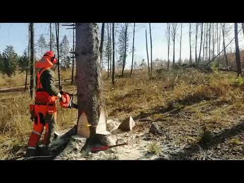 Husqvarna 572 xpg ťažba dreva