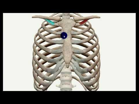 Krążenie w mięśniach szkieletowych