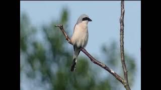 Vogelstimmen in der Feldmark