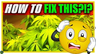 EASY Ways to Revive a Sick Plant QUICKLY
