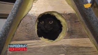 У столичных бродячих котов может появиться свой дом