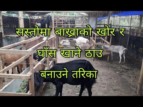 सस्तोमा बाख्राको खोर र घाँस खाने ठाउ बनाउने तरिका/Bhetghat.com/राजेन्द्र दोबालि