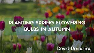A guide to planting spring flowering bulbs in autumn