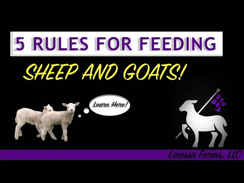 , title : '5 Basic Rules for Feeding Sheep and Goats!