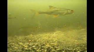 Рыбалка на жостовском пруду карьере