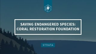 Saving Endangered Species: The Coral Restoration Foundation