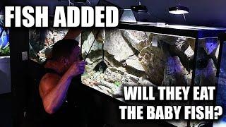 THE FISH HAD BABIES!! Adding new fish to the aquarium