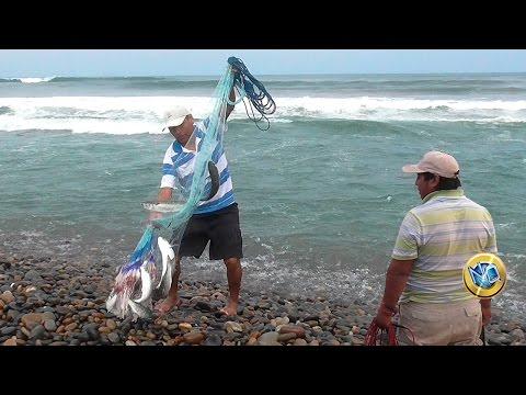 Kaluga pesca regionale