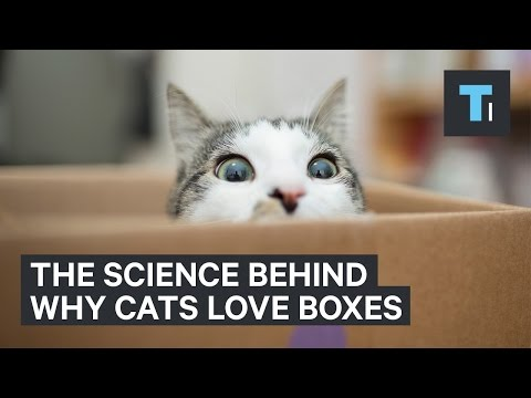 An Empty Box Is The Best Gift You Can Give Your Cat