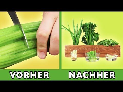Küchenabfälle nachwachsen lassen: mit diesem Tipp sprießt das Gemüse immer wieder. Top Recycling!