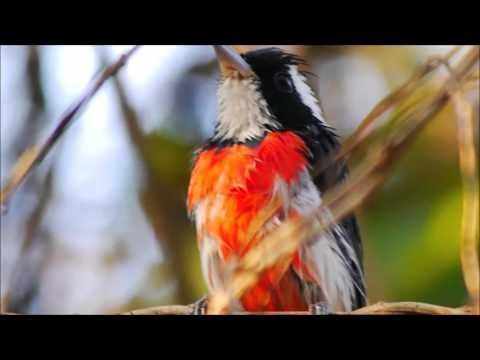 Mexico Birds –  El Rosario Reserve and Huatulco Area