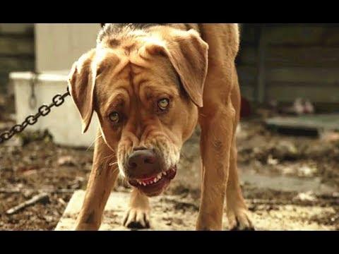 大狗被主人抛弃后彻底绝望,统领200多只流浪狗,疯狂报复人类!《白色上帝》几分钟看狗狗无奈的一生